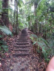 Mount Warning Summit Climb Hike